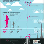 Mega Shark Infographic