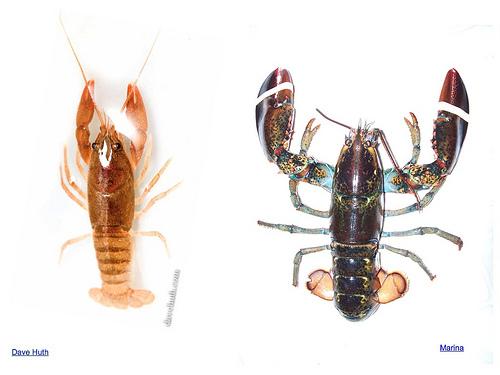 Crustacean Estimation