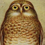 An old drawing of an owl.