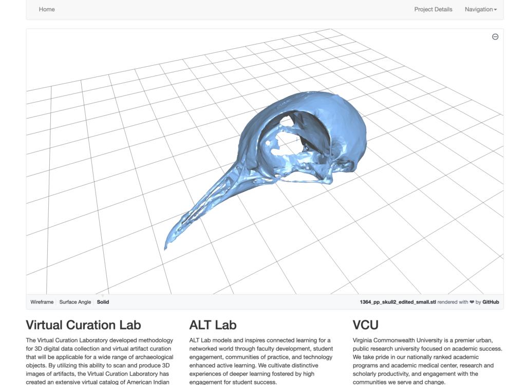 3D scan of a passenger pigeon skull.